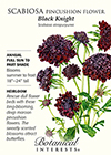 Scabiosa Pincushion Flower Black Knight HEIRLOOM Seeds