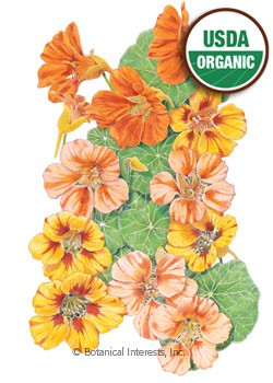 Nasturtium Fiesta Blend Organic HEIRLOOM Seeds