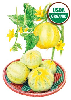 Cucumber Lemon Organic HEIRLOOM Seeds