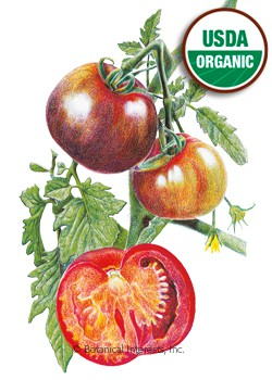 Tomato Pole Black Krim Organic HEIRLOOM Seeds