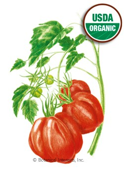 Tomato Pole Oxheart Organic HEIRLOOM Seeds