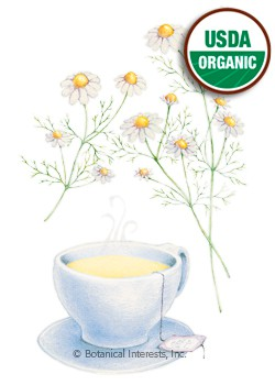 Chamomile German Organic HEIRLOOM Seeds