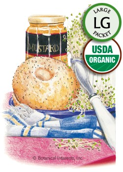 Sprouts Alfalfa Organic Seeds (LG)