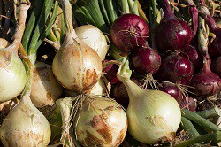 Onions: Sow and Grow Guide